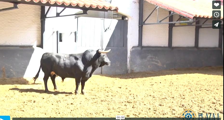 Madrid Bullfight may 14th